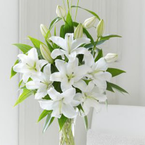 Stunning white oriental lilies arranged with choice foliages.